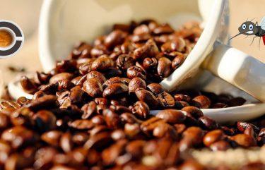 caffe-contro-zanzare